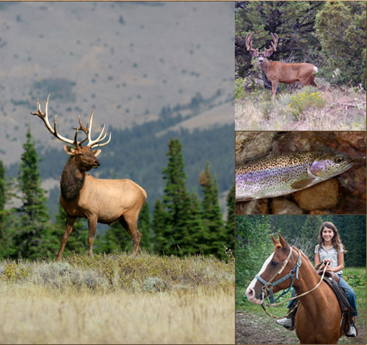 Elk Outfitter Chama New Mexico